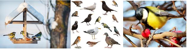 Vogels-voeren-per-seizoen